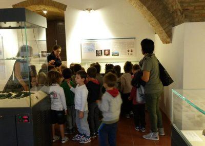 maf-museo-archeologico-forlimpopoli-37